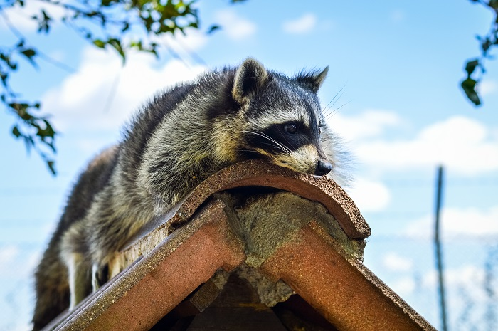 Preventing Animals from Damaging Your Commercial Building