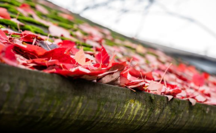2019 How Falling Leaves Affect Commercial Roof Systems